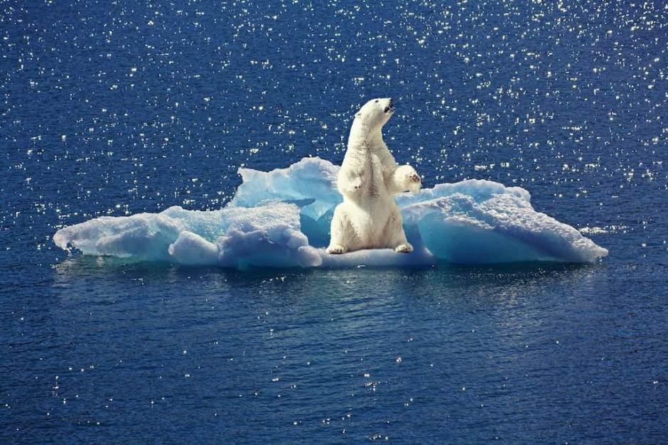 薩提爾冰山理論 北極熊