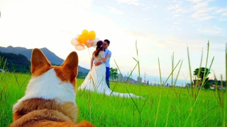 社子島頭公園,婚紗攝影秘境,柯基